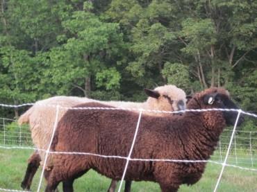 Wool play